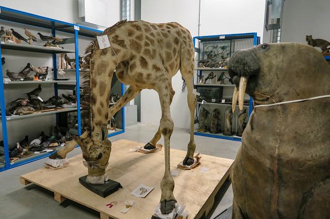 giraffe glasgow museums resource centre