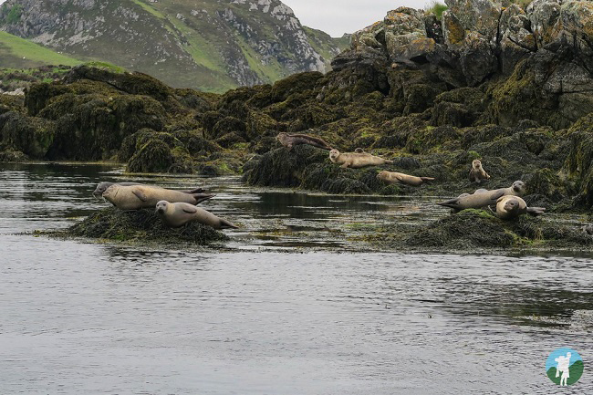isle of lewis boat trips