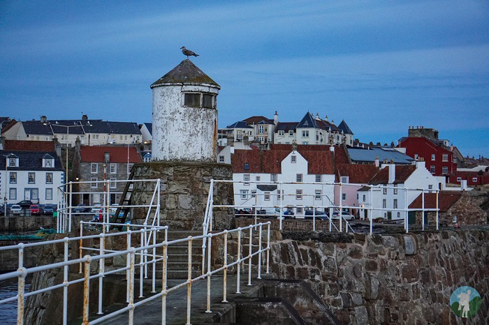 pittenweem harbour east neuk
