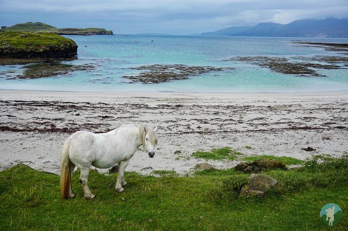 ponies muck