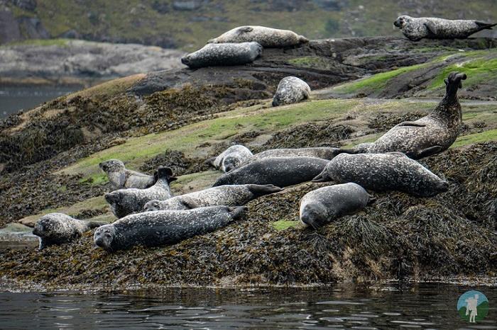 seal colony skye scotland