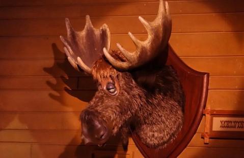 1.1434118989.moose