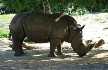 1.1434393887.rhino