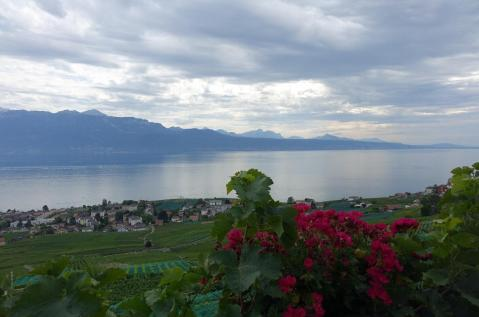 4.1442080404.view-of-the-lake-and-vineyards