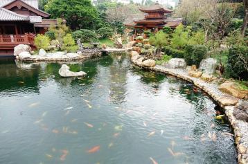 3.1458147631.the-fish-pool