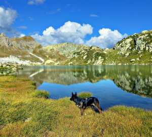 Bring Fido Along! Where To Find Dog Friendly Hiking Trails
