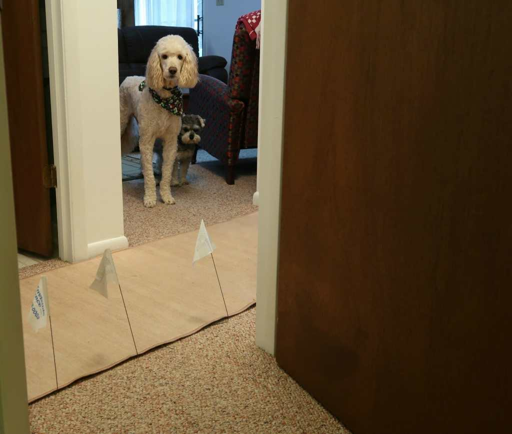 Invisible Pet Fences: Everything You Need To Know Travels with Bibi