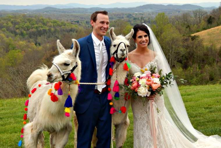 How To Invite A Llama To Your Wedding Or Outdoor Event in 2019 Travels with Bibi