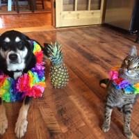 Howlidays: Pineapple Day