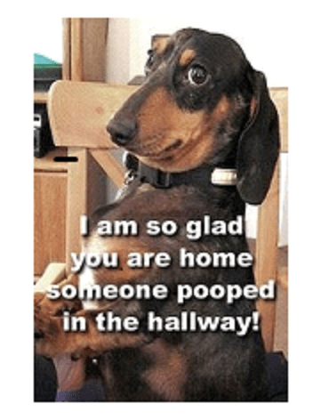 dog pooped in hallway resized