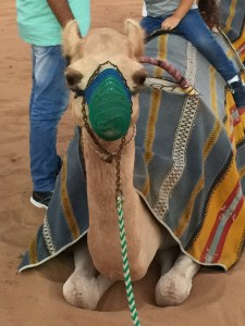 Hi there camel!