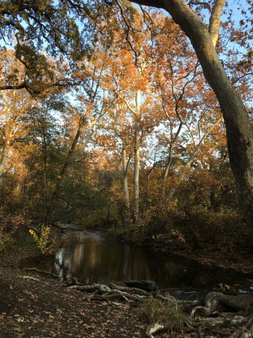 Big Chico Creek on campus