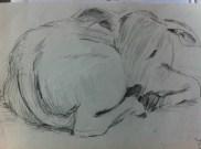 Baby cow in Banaras (Varanasi) from my India Sketchbook