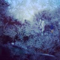 frosty glass