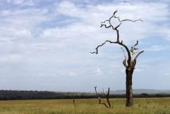 Serengeti landscape, Tanzania