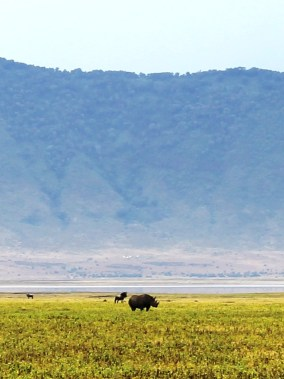 Black rhino in the Ngorogoro Crater.
