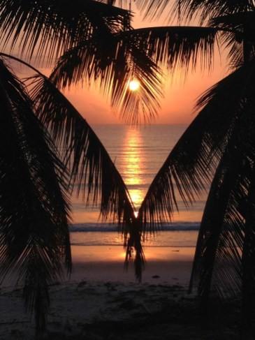 View from our accommodation, Palm trees at sun rise, Dar Es Salaam