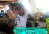 Fresh catch at Kivukoni Fish Market in Dar Es Salaam, Tanzania