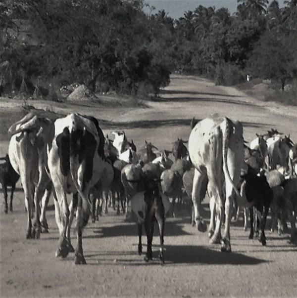 Traffic jam in Kigamboni, Dar Es Salaam