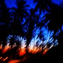 Blurred palm trees at dusk, Kigamboni, Tanzania