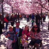 Ali and family under the blossom trees in Kungsträdgården, in Stockholm, Sweden