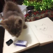 Trying to sketch Modraniht the cat