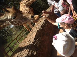 Lottie feeding a giraffe at the Nairobi Giraffe Centre