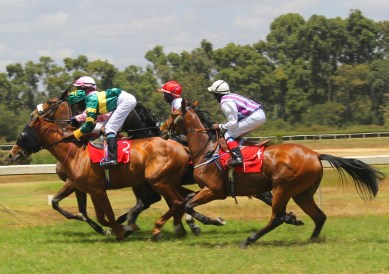 Horses racing past at Ngong Racecourse in Nairobi