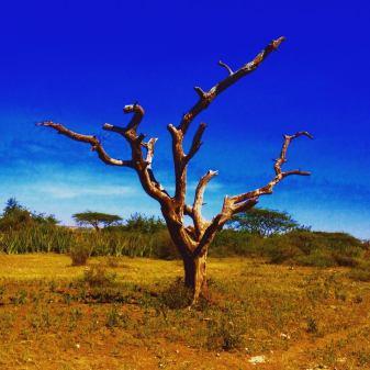 Tree in the Serengeti landscape