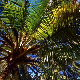 Palm trees at the Serena Beach Resort and Spa in Mombasa, Kenya