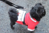 A dog running in the 2018 Santa Fun Run