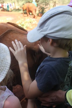 Leon patting a baby elephant the David Sheldrick Wildlife Trust in Nairobi