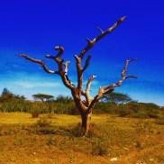 Tree in Ngorongoro Conservation Area in Tanzania