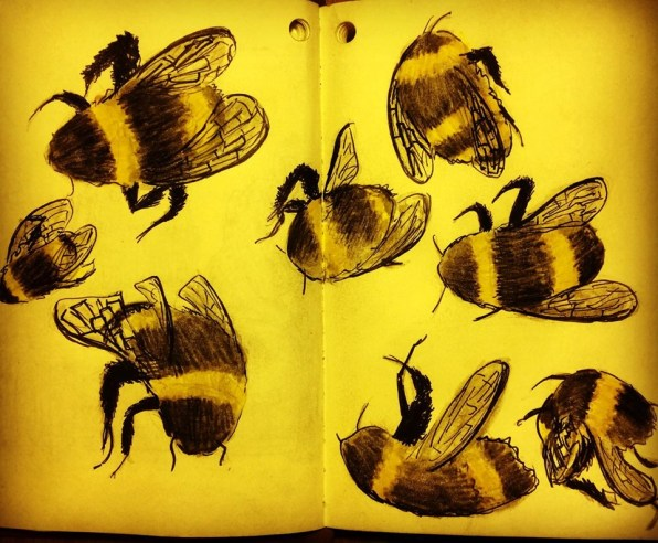 Study of a bee