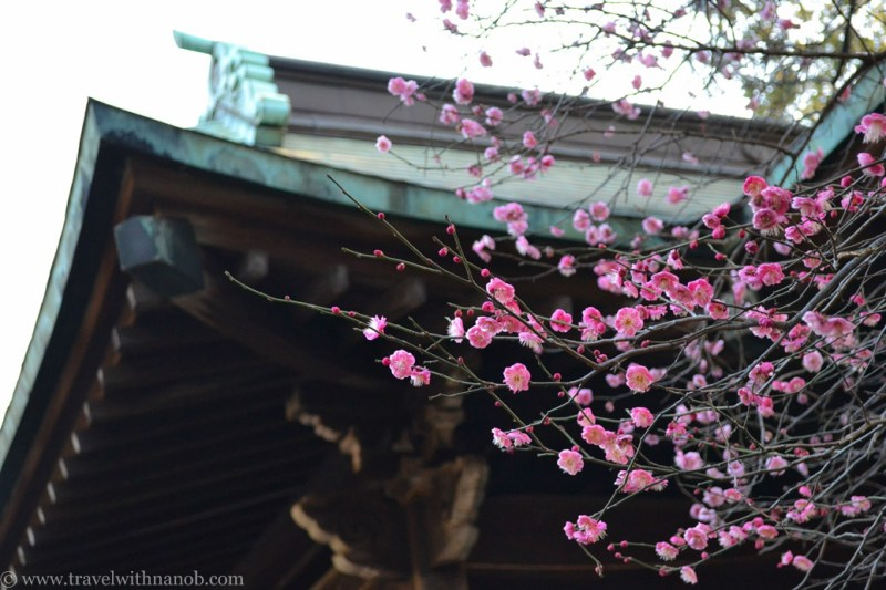 jiyugaoka-tokyo-69