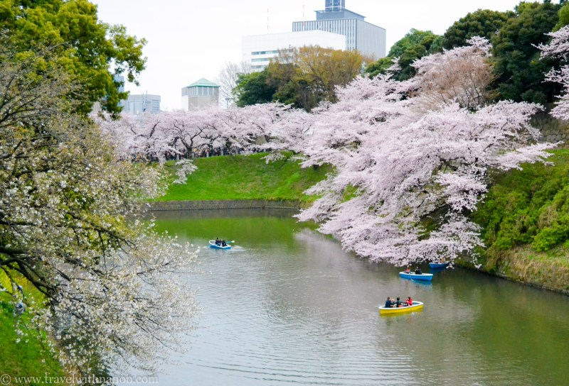cherry-blossom-tokyo-29