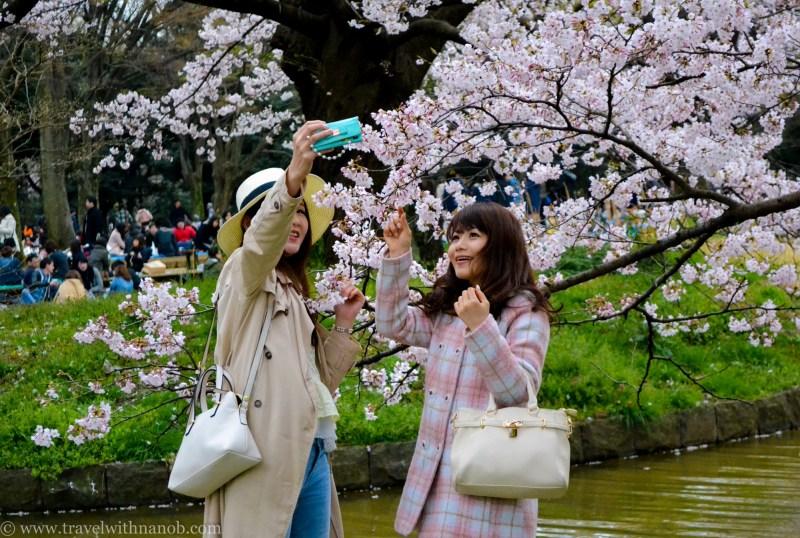 cherry-blossom-tokyo-41
