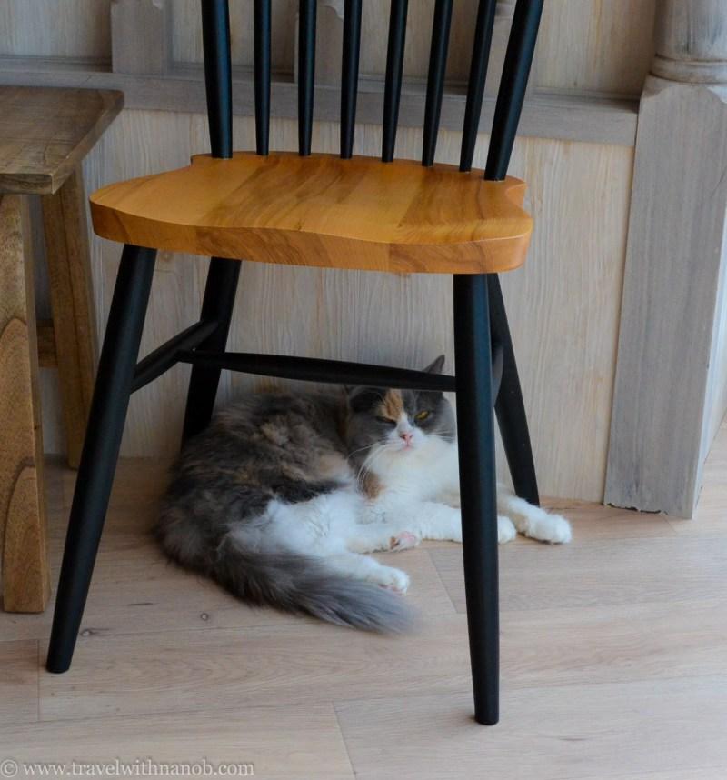 mocha-cat-cafe-12