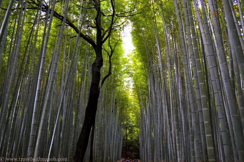 western-kyoto-guide-13