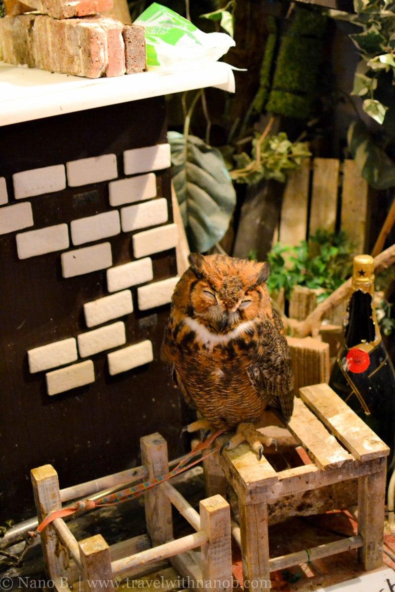 owl-cafe-tokyo-8