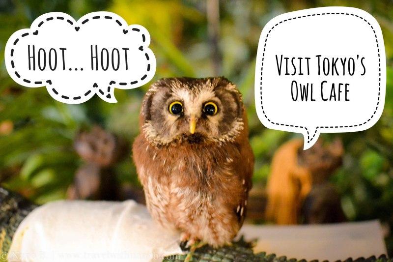 visit-tokyos-owl-cafe-full-story-on-www-travelwithnanob-com