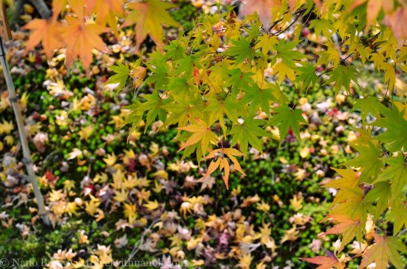 arashiyama-kyoto-12