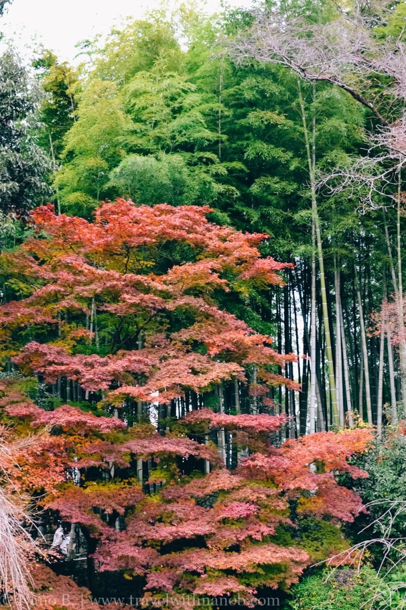 ryozenji-kyoto-2