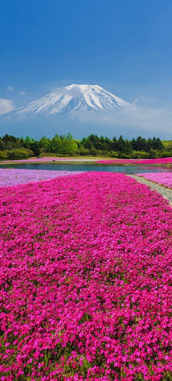 japan-flower-festivals-15