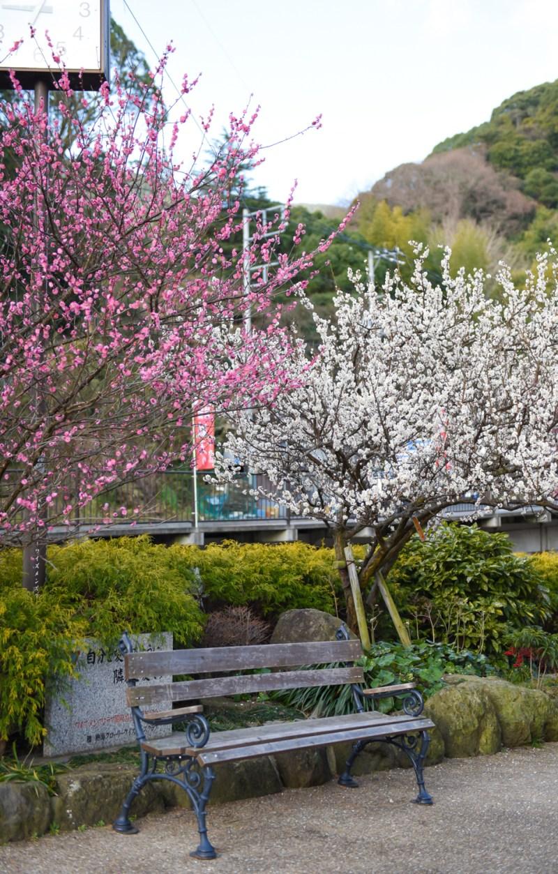 japan-flower-festivals-7