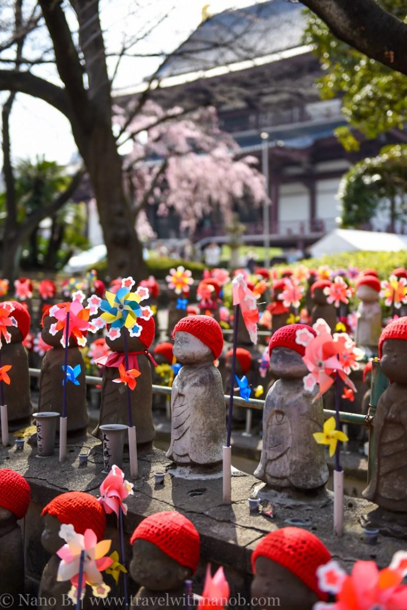 cherry-blossom-tokyo-31