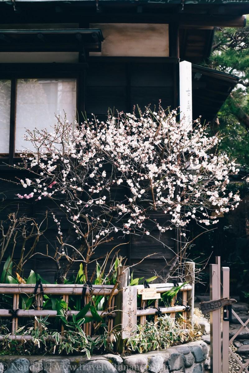 tokyo-shrines-1