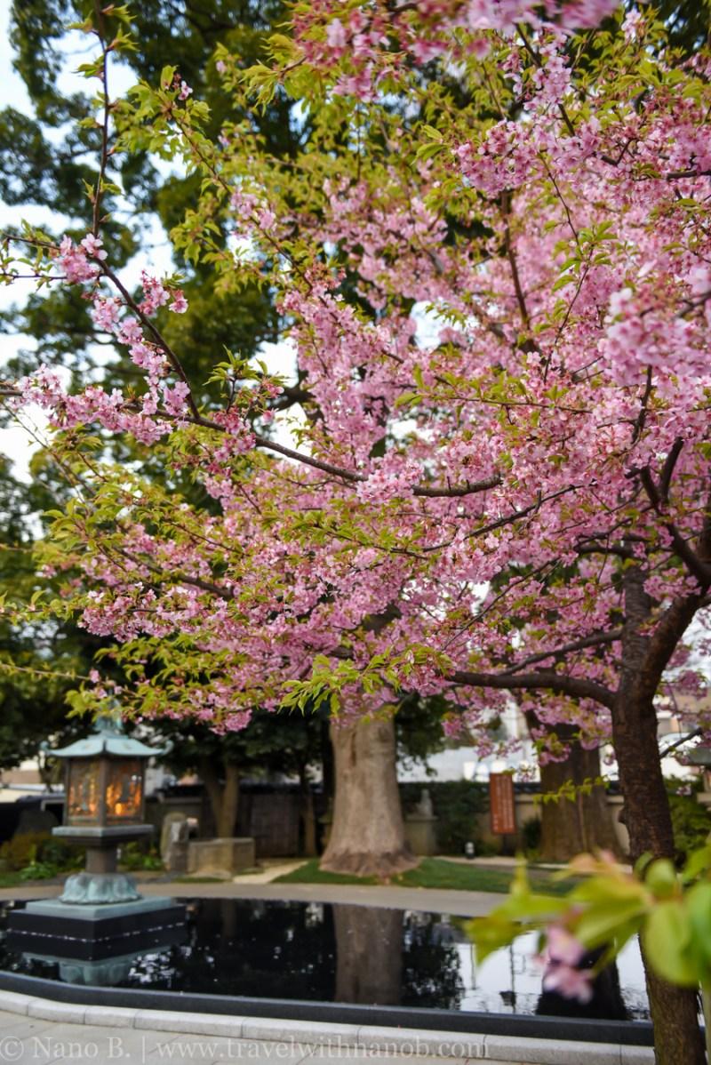 tokyo-shrines-39