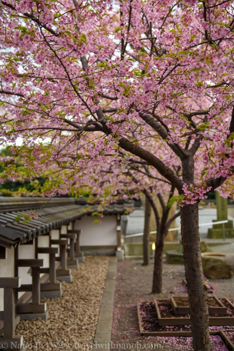tokyo-shrines-44