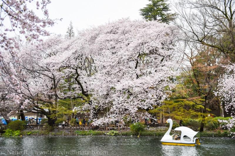 inokashira-park-11